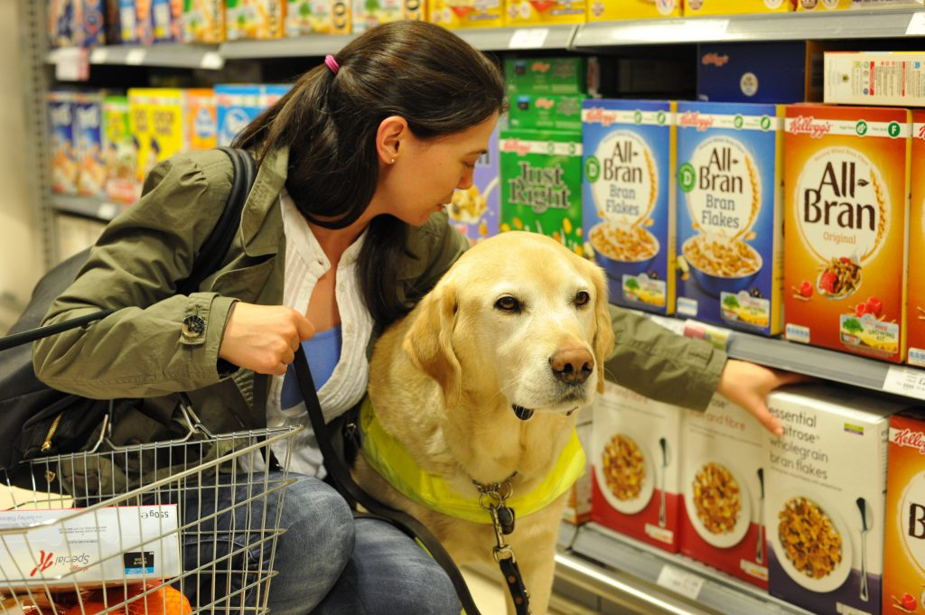 Guide Dog assisting with shopping in a supermarket
